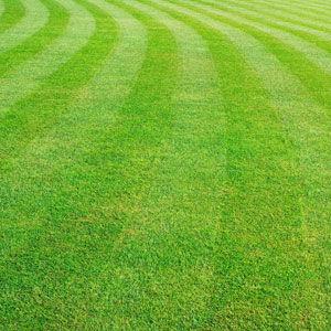 lawn care service Oakdale, MN